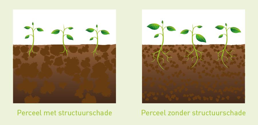 Illustratie Effect bodemverdichting op gewasgroei